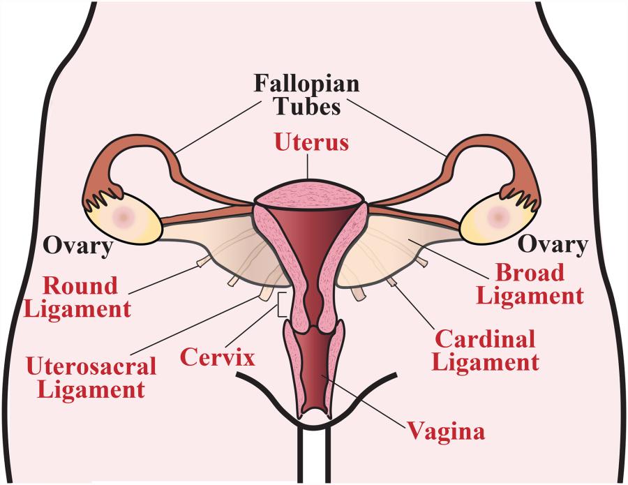 kadınlarda orgazm nasıl olur