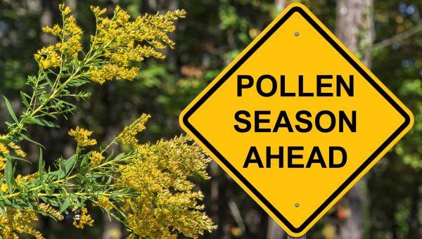 polen alerji zamani